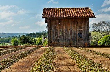 brazil-cerrado