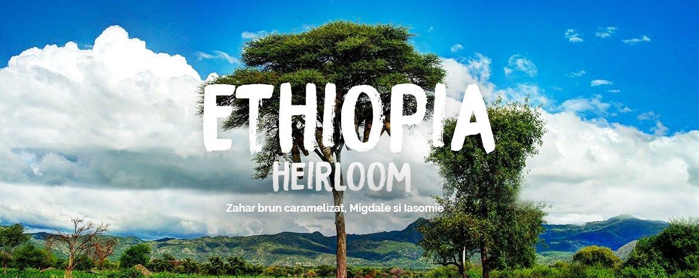 ethiopia heirloom