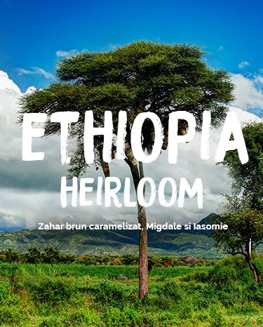 ethiopia heirloom